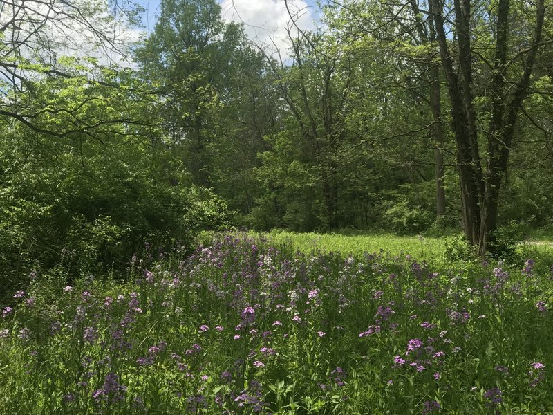 Flowers at Blacklick Woods MP