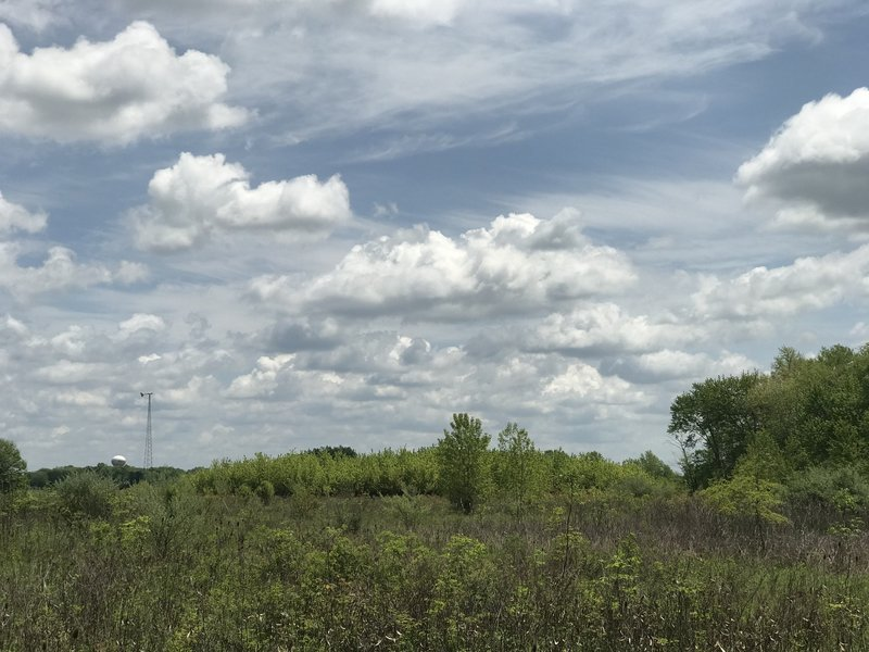 Late spring sun and clouds on the Marsh Hawk Trail.