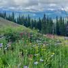 Wildflowers looking across Vail Pass