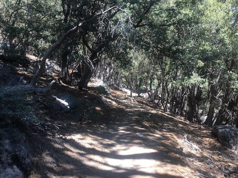 An oak shaded trail.