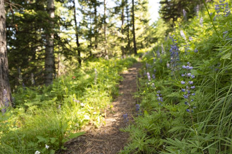 Trailside wildflowers.