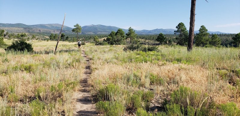 Running along the Frijoles Rim Trail. The Los Alamos county highpoint, Caballo Mountain, is the peak just left of the burned dead tree on the right side of the photo.