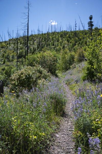 Wildflower climb