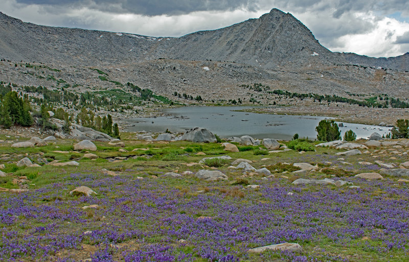 L Lake from the north shore. There are many acres of Brewer's lupine near the lake