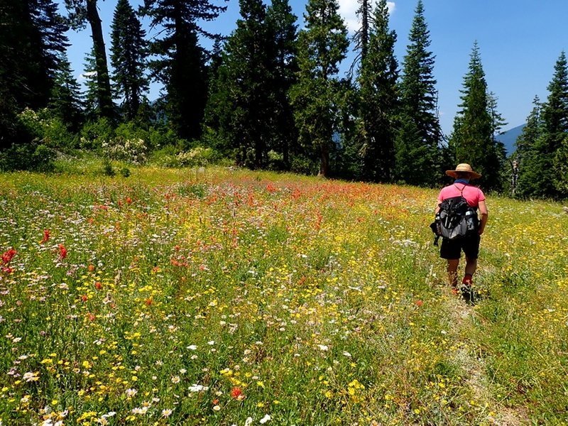 Meadows filled with wildflowers along the upper part of the Sucker Creek Trail