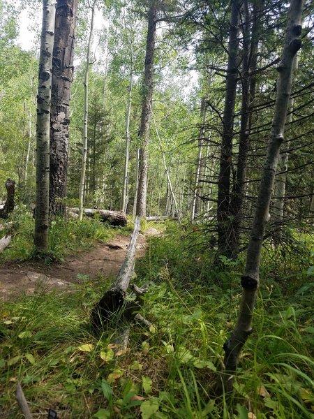 Trail flattens out near the Garden of Eden