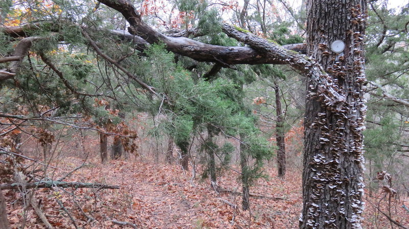 Be wary of Low overhanging branches ....as they can cause head injuries .