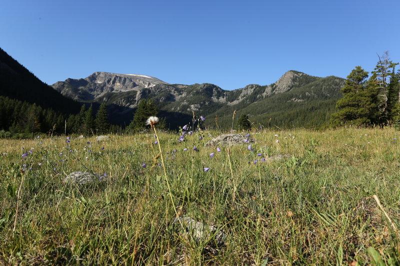 Breakneck Meadow