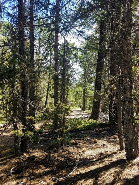 Undemanding stroll through the forest.