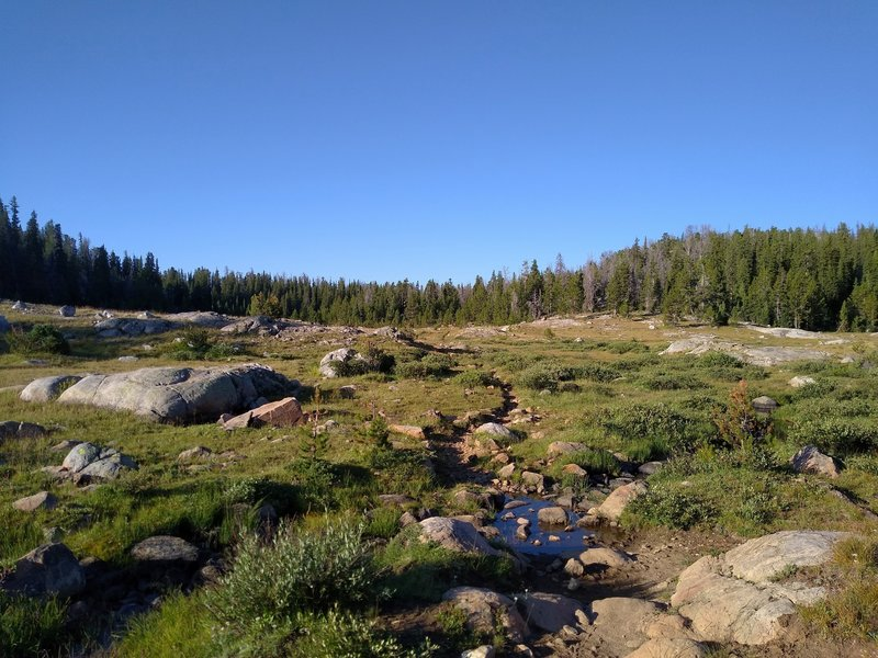 Rocky meadows at 9,800 feet, near North Fork Lake.