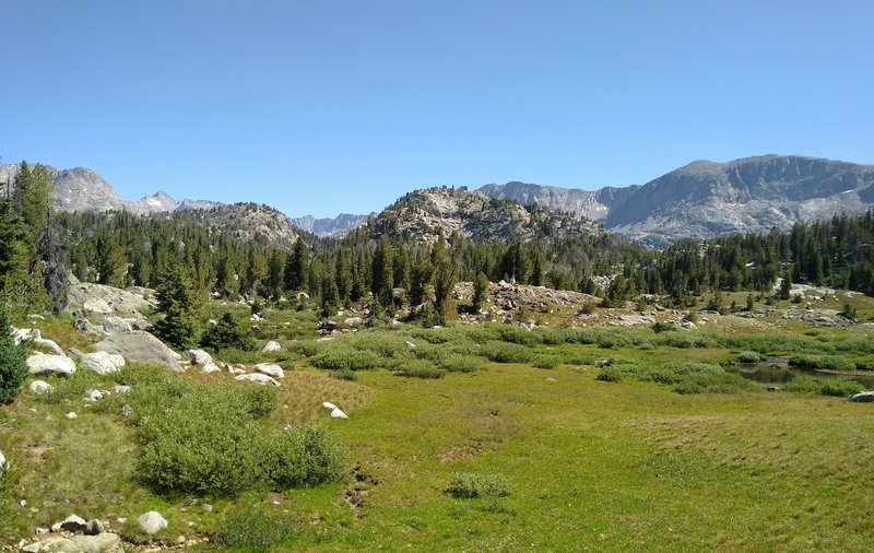 A pretty high meadow, elevation about 10,000 feet., along Highline Trail, with a backdrop of Wind Rivers peaks.