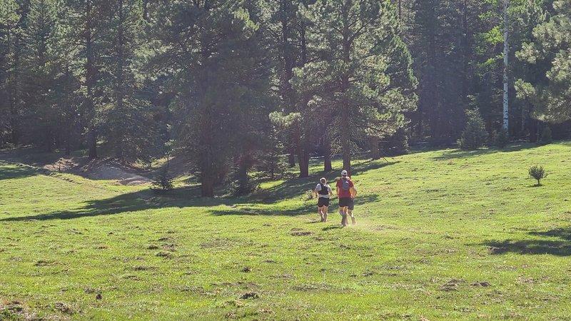 Meadow running in Calaveras Canyon.