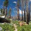 A burned section along the John Muir Trail