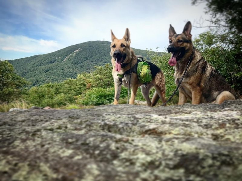 Morning hike with the dogs was amazing