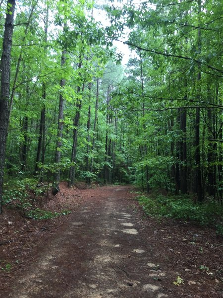 Pine needle covered trail