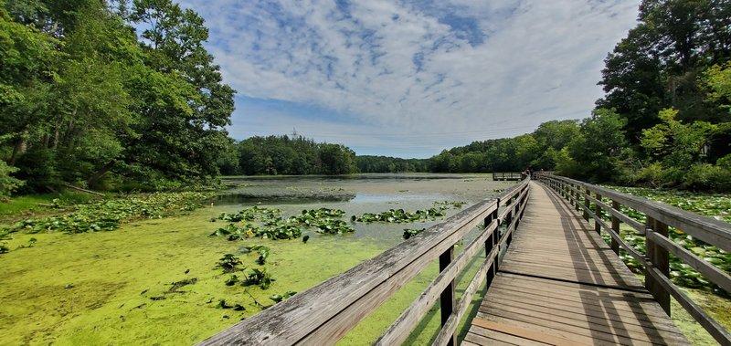 Teatown Lake Boardwalk