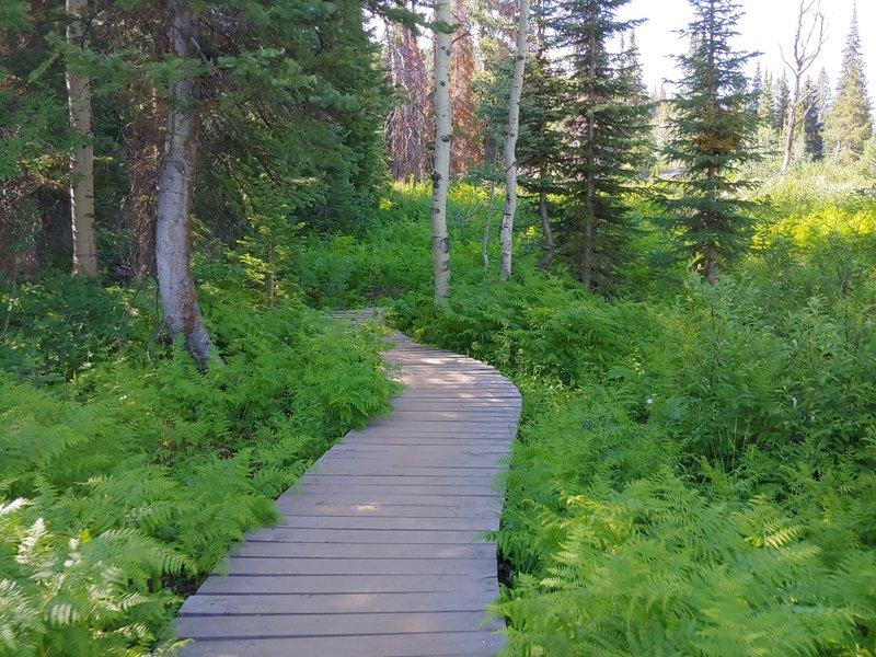 Wood bridge along low area of trail