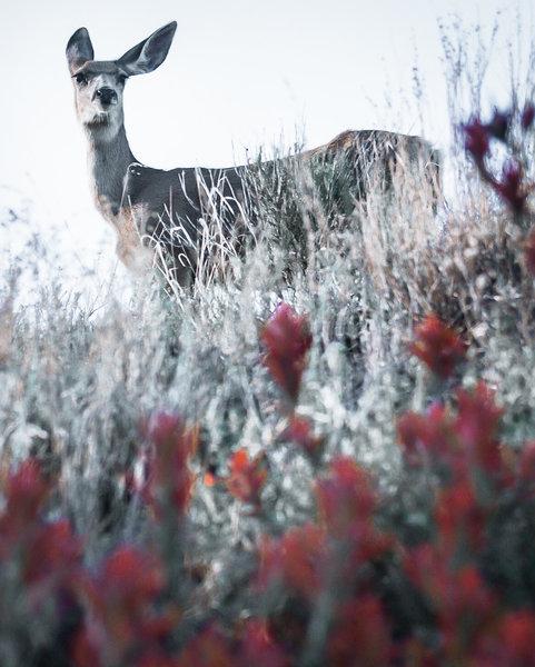 Deer often graze along this trail