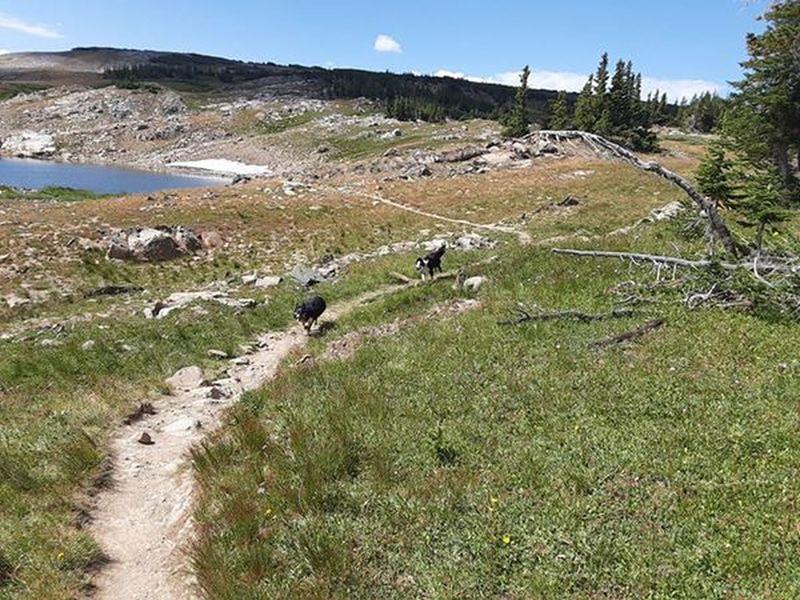 Blue and Mocha on Alpine Lakes Loop