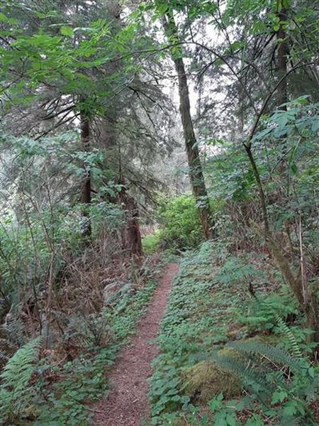 Trail running through a green woods with ferns on both sides.