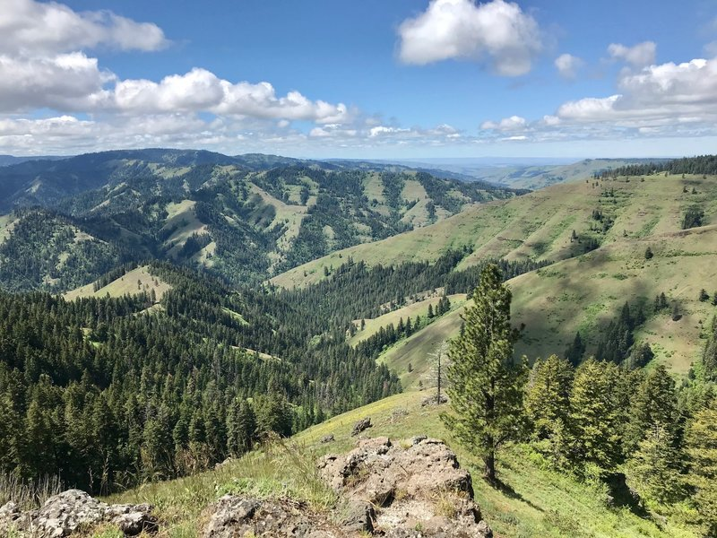 At the viewpoint looking southwest down Lick Creek Canyon and the North Fork Umatilla Wilderness.