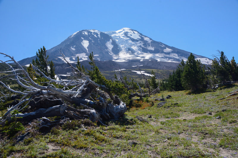 Mt. Adams from High Camp.