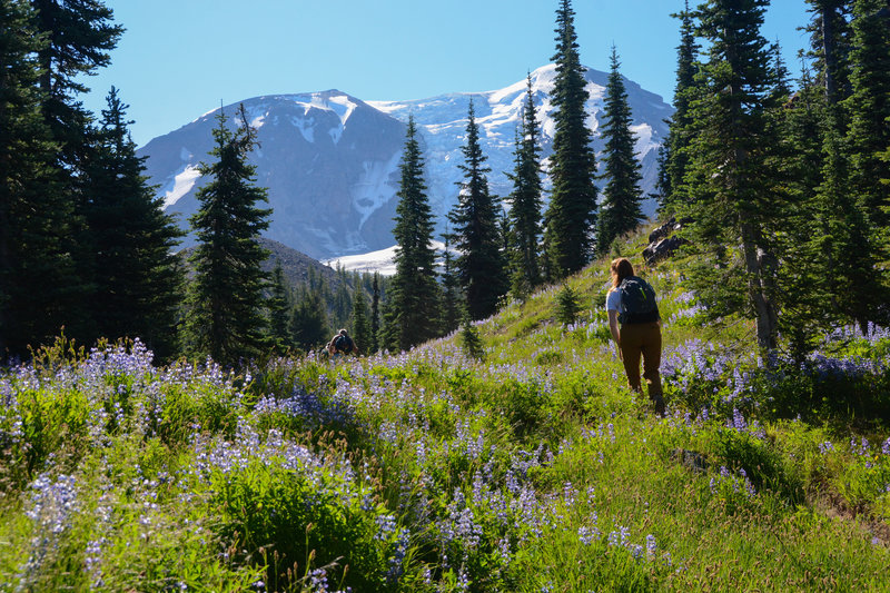 Approaching the PCT at the top of the Divide Camp Trail with great views of Adams.
