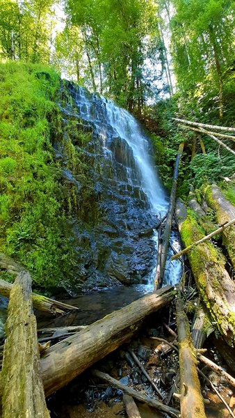 University Falls tumbles over a stepped rock face onto a pile of huge logs, surrounded by moss and red alder.