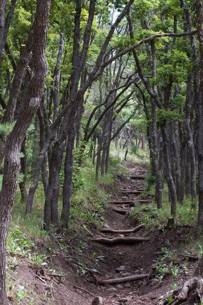 Beautiful oak grove near the top of the Turkey Canyon Trail.