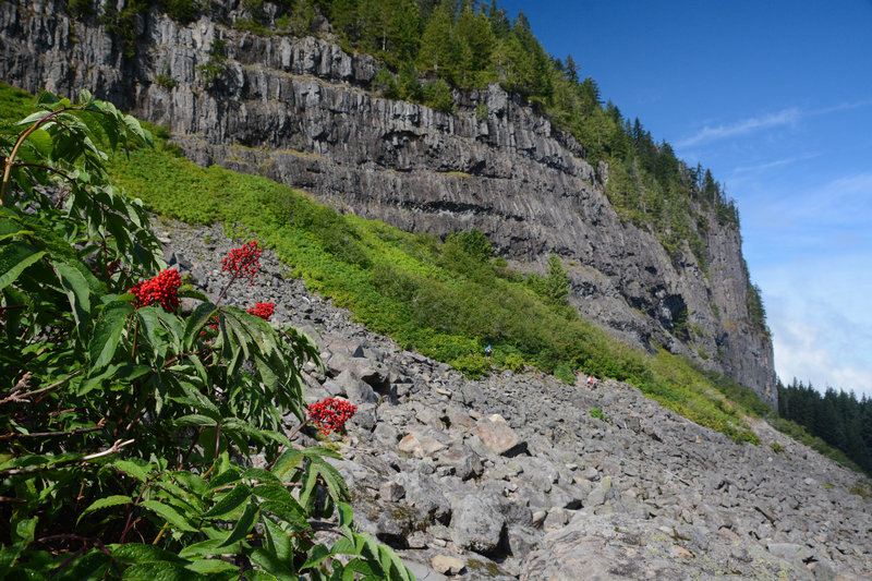 Berries add a splash of color in the talus field below Table Rock's columnar basalt cliffs.