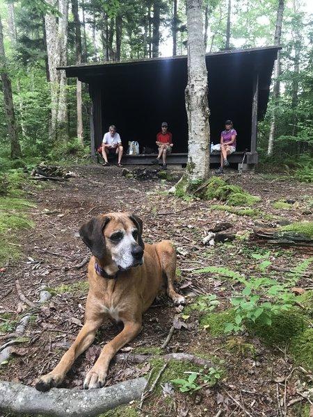 Bear Pen Ridge Shelter