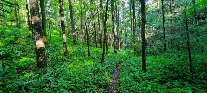 Wagon Road Gap Trail