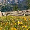 Wildflowers on the way to Pitkin Lake