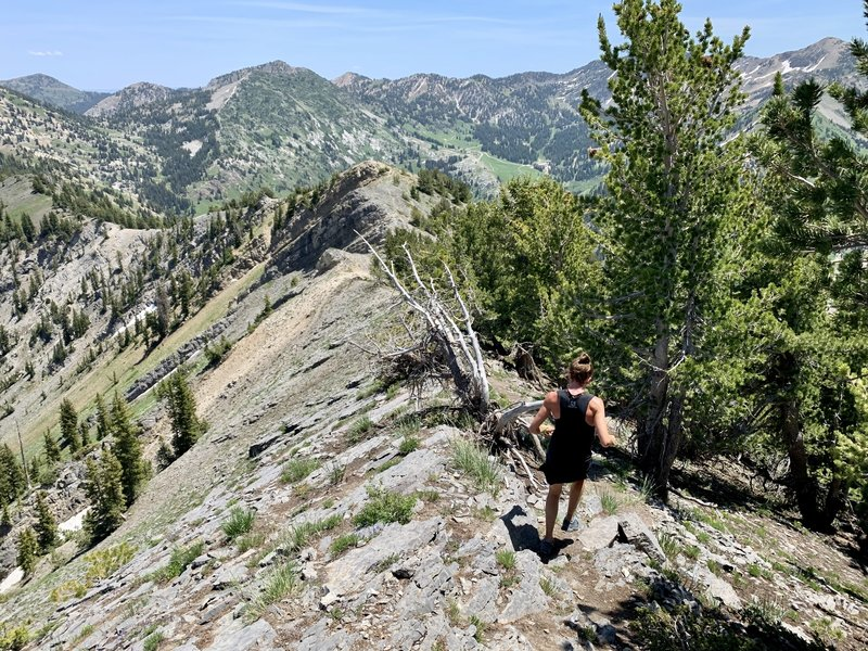 Rolling singletrack toward Honeycomb Cliffs.