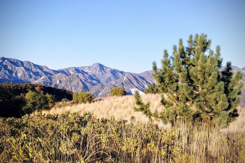 Field near the Tee Pee, looking E-SE towards Agua Canyon.