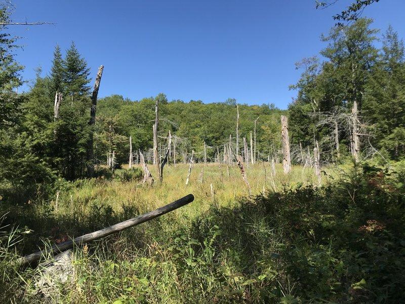 Dead tree marsh.