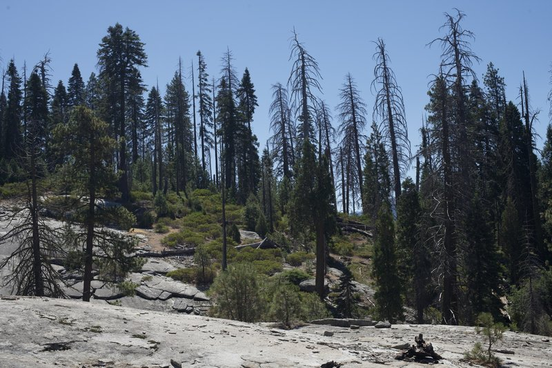 View from the Sugar Pine Trail as it crosses a granite rock. No sequoias in this area.