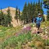Wildflowers near Rogers Pass Lake