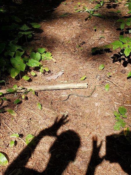Little gardener snake