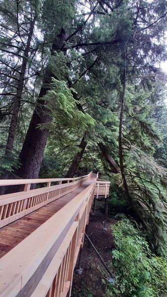 The boardwalk bridge over Saltair Creek headed away from the Big Cedar tree.