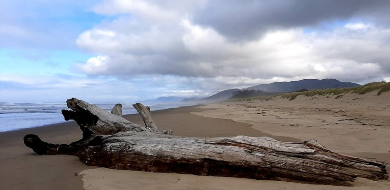 A driftwood log on a long, misty beach.