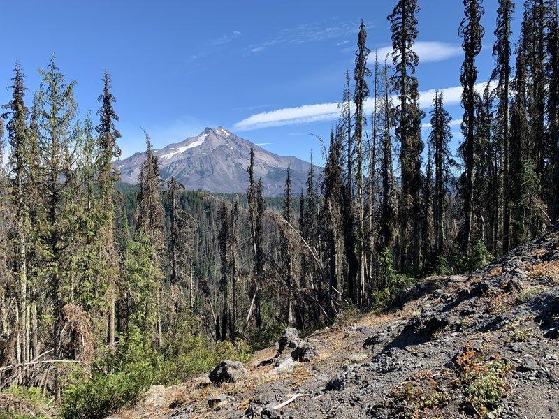 Mount Jefferson from Triangulation Peak Trail not far east of the peak.