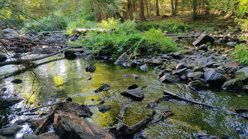Bellamy river running water