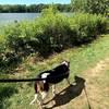 Miss Bessie taking a gander at Worster Lake.