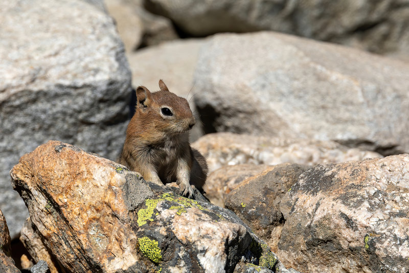 A Least Chipmunk on Inspiration Point