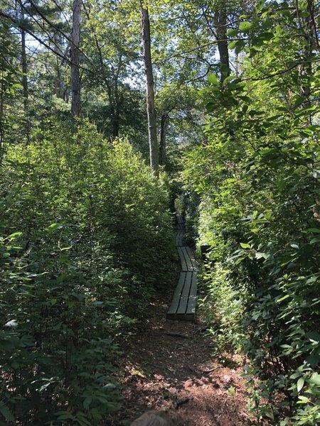 Blue Trail at Fisherville Brook Wildlife Refuge.