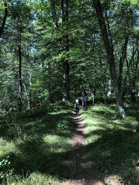 Red Trail at Fisherville Brook Wildlife Refuge.