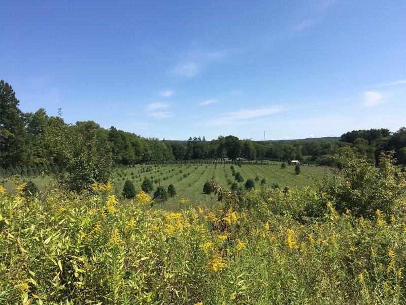 Heritage Farm from Tree Farm Trail.
