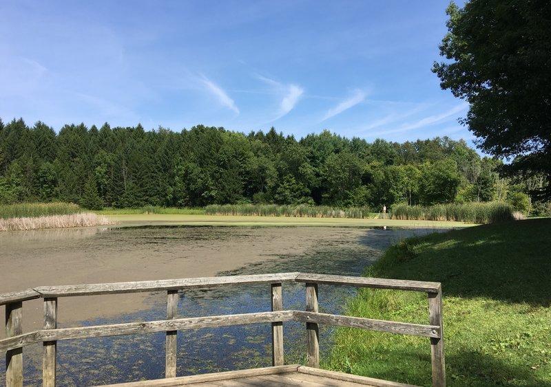 Horseshoe Pond - an easy paved walk