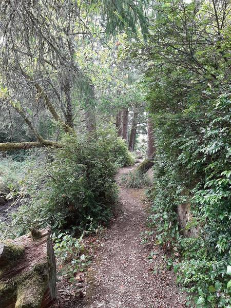 A narrow trail weaves between stumps and trees with tall bushes on both sides.